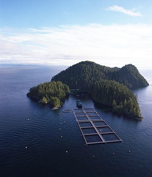 the importance of aquaculture Mariculture is the farming of aquatic plants and animals in salt water thus, mariculture represents a subset of the larger field of aquaculture, which involves the farming of both fresh-water and marine organisms.
