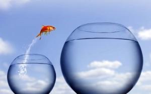 Fish to next level